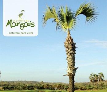 Mangais-Ecoturismo-Golf-Resort-1